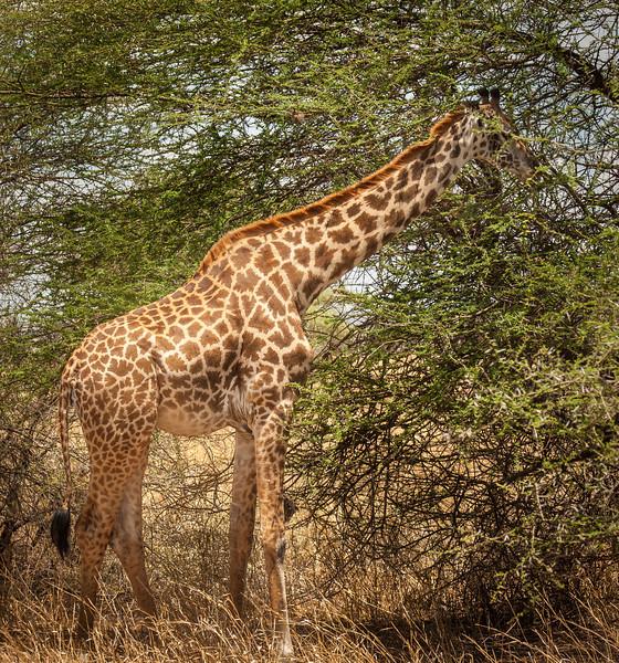 Tarangari_Tanzania_2006_0050