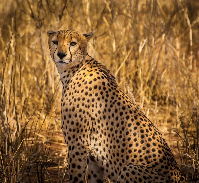 Tarangari_Tanzania_2006_0225