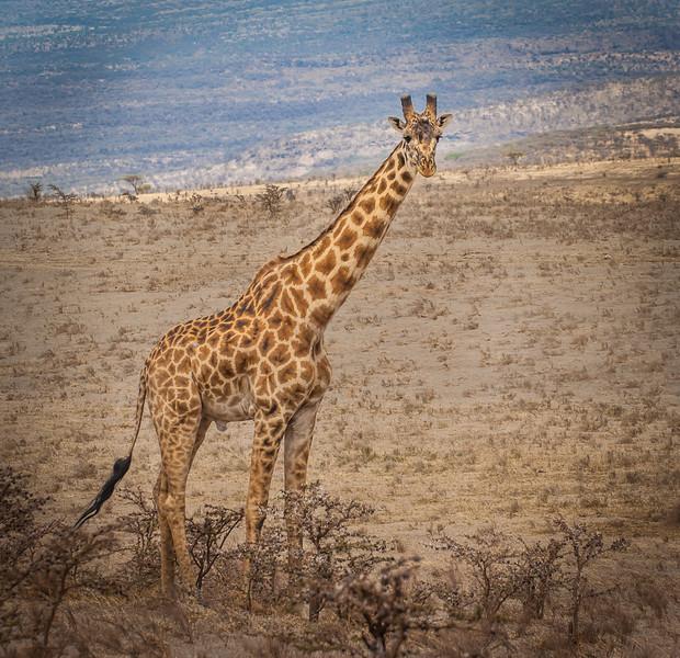 Olduvai_Gorge_Tanzania_2006_061