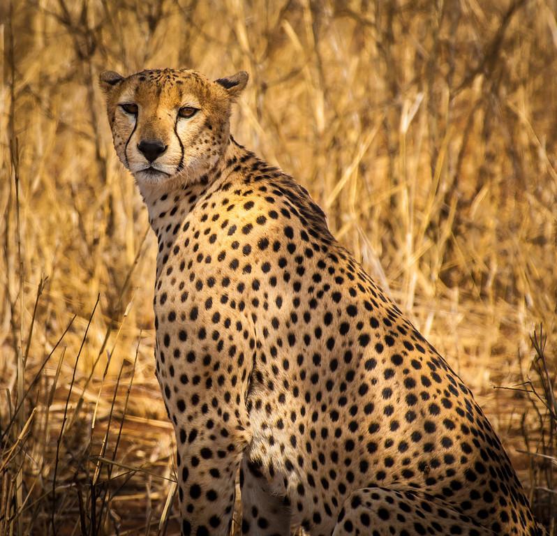 Tarangari_Tanzania_2006_0226
