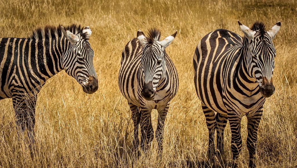 Ngorongoro_Creater_Tanzania_2006_058