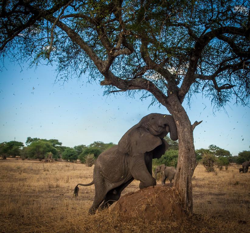 Tarangari_Tanzania_2006_0326
