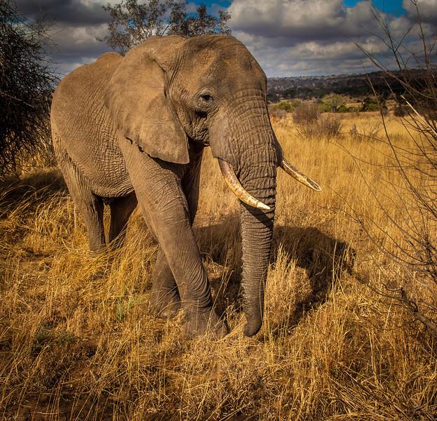 Tarangari_Tanzania_2006_0182