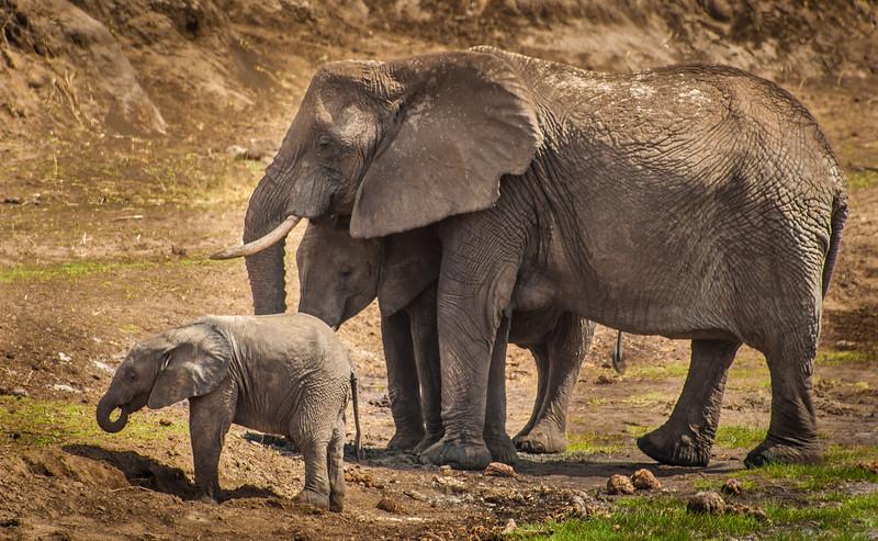 Tarangari_Tanzania_2006_0101