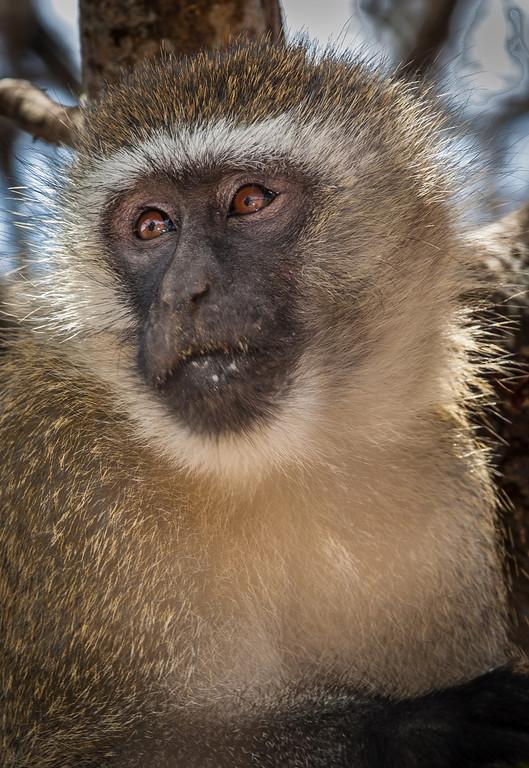 Tarangari Tanzania