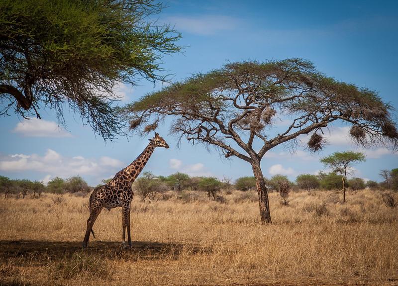 Tarangari_Tanzania_2006_0238