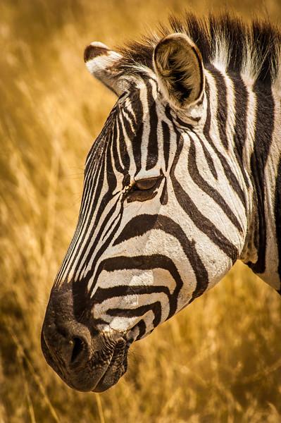 Ngorongoro_Creater_Tanzania_2006_054
