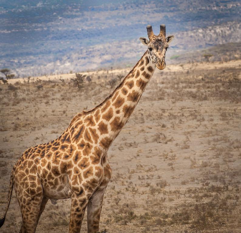 Olduvai_Gorge_Tanzania_2006_062