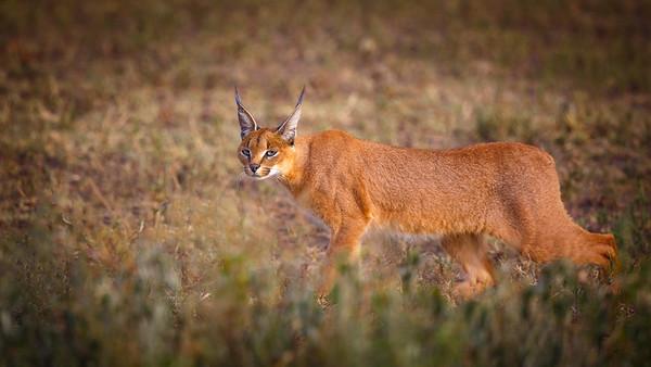 Other Animals, Tanzania Feb 2015