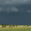 Wildebeests and zebra on plains with storm approaching in background, Lamai Serengeti, Tanzania