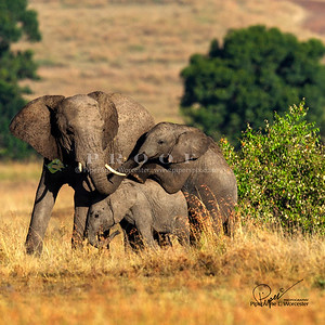 Africa, East Africa, Kenya