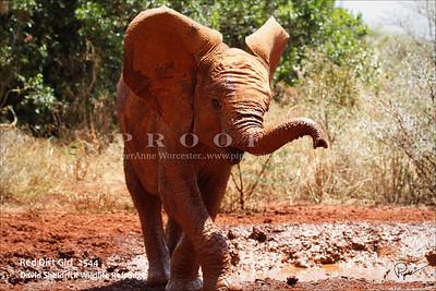 IGRSld_Kenya_2544_PAW_Nrb copy