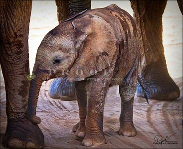 Elephants Kenya,