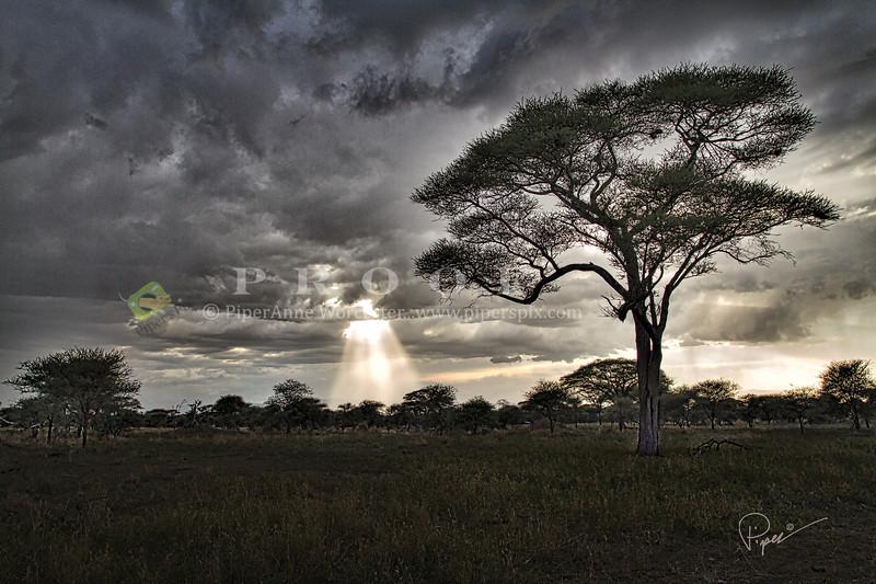 Prt_Tree_7519 (1)