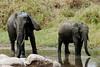 Tanzania - Safari :