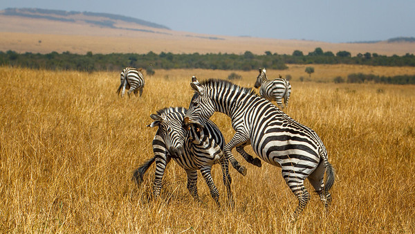Other Animals of Tanzania