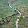 Aerial view of Blue Wildebeests (Connochaetes taurinus), Serengeti, Tanzania