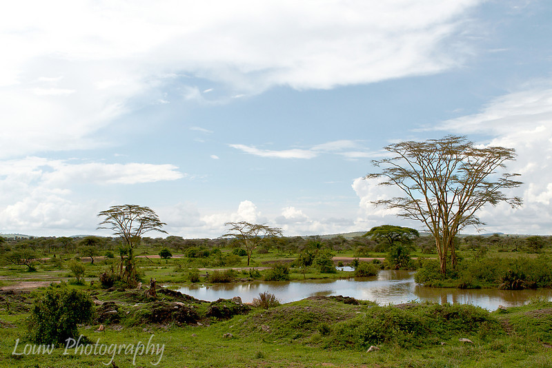 "<a target=""NEWWIN"" href=""http://en.wikipedia.org/wiki/Serengeti"">Serengeti</a>, Tanzania"