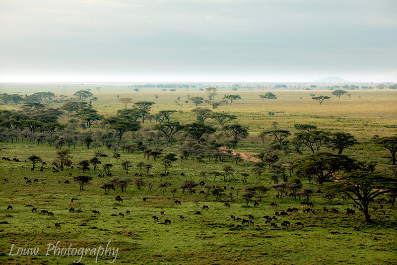 "Aerial view of the <a target=""NEWWIN"" href=""http://en.wikipedia.org/wiki/Serengeti"">Serengeti</a>, Tanzania"