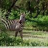 Stripes & Grass