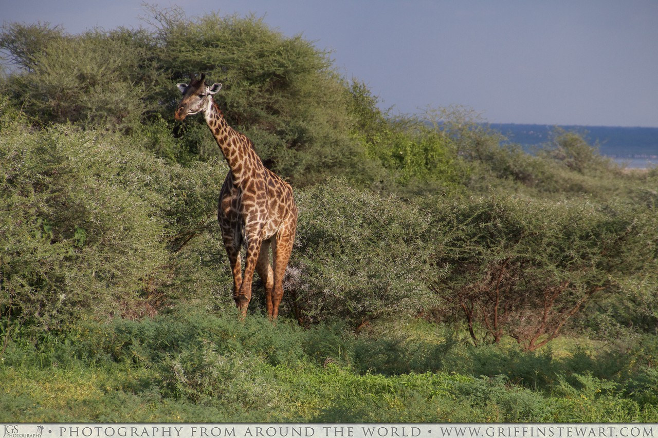 Lake Manyara National Park 126