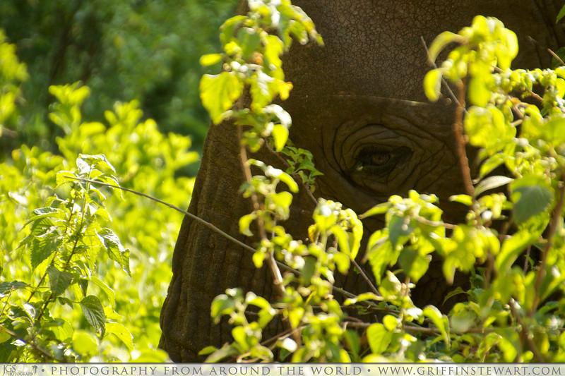 The Elephant Eye