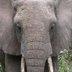 Tanzanian – Best Safari Destinations (Lake Manyara, Ngorogoro Crater and Tarangire)