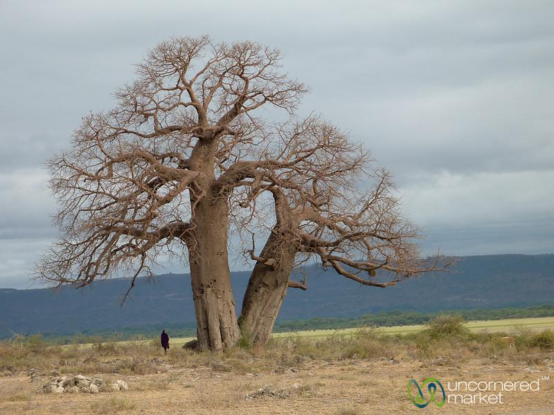 Masai Under Baobab Tree - Lake Manyara, Tanzania