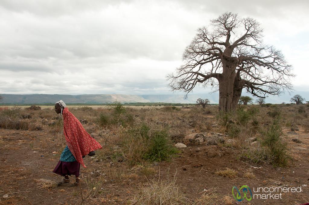 Masai Woman and Baobab Tree - Lake Manyara, Tanzania
