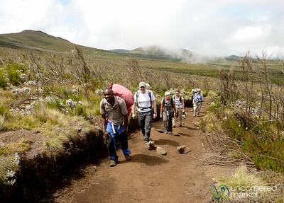 Gentle Climb on Day 2 - Mt. Kilimanjaro, Tanzania