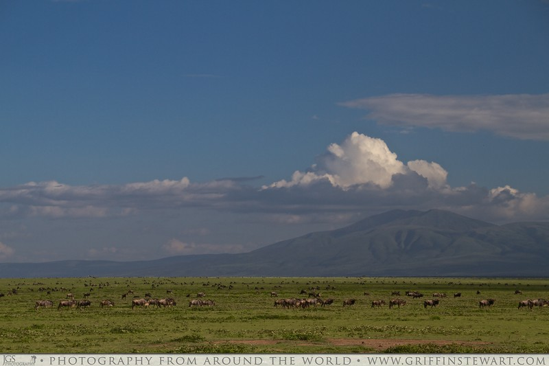 Wildebeest As Far As The Eye Can See 2
