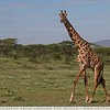 The Tall Spotted Animal