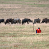 "Maasai and his Cows, <a target=""NEWWIN"" href=""http://en.wikipedia.org/wiki/Ngorongoro"">Ngorongoro Crater</a>, Tanzania"