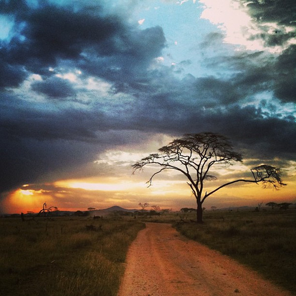 Sunset in The Serengeti: acacia trees and the road home #Tanzania, props to @gadventures