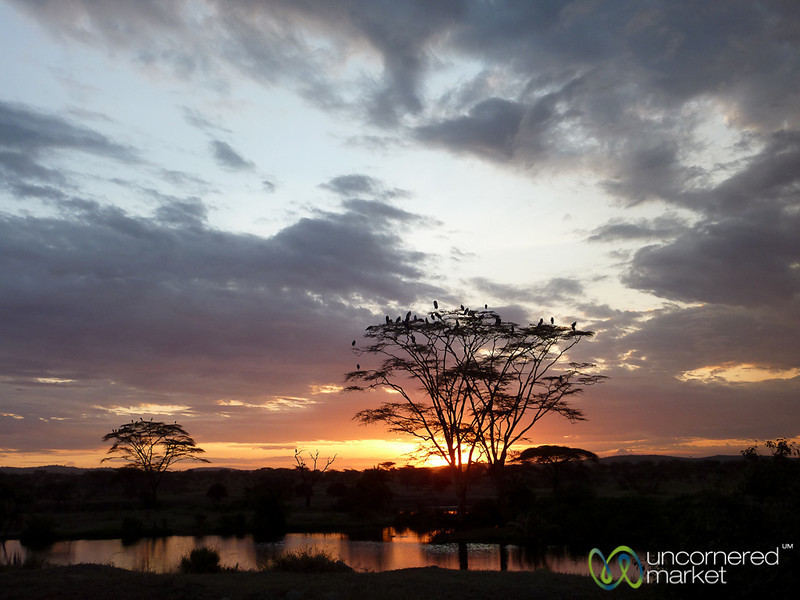 Sunset and Acacia Tree in Serengeti - Tanzania