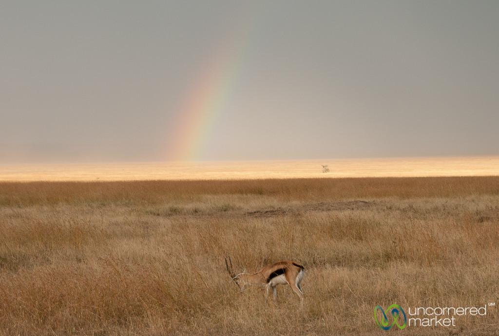 Rainbow in the Serengeti - Tanzania