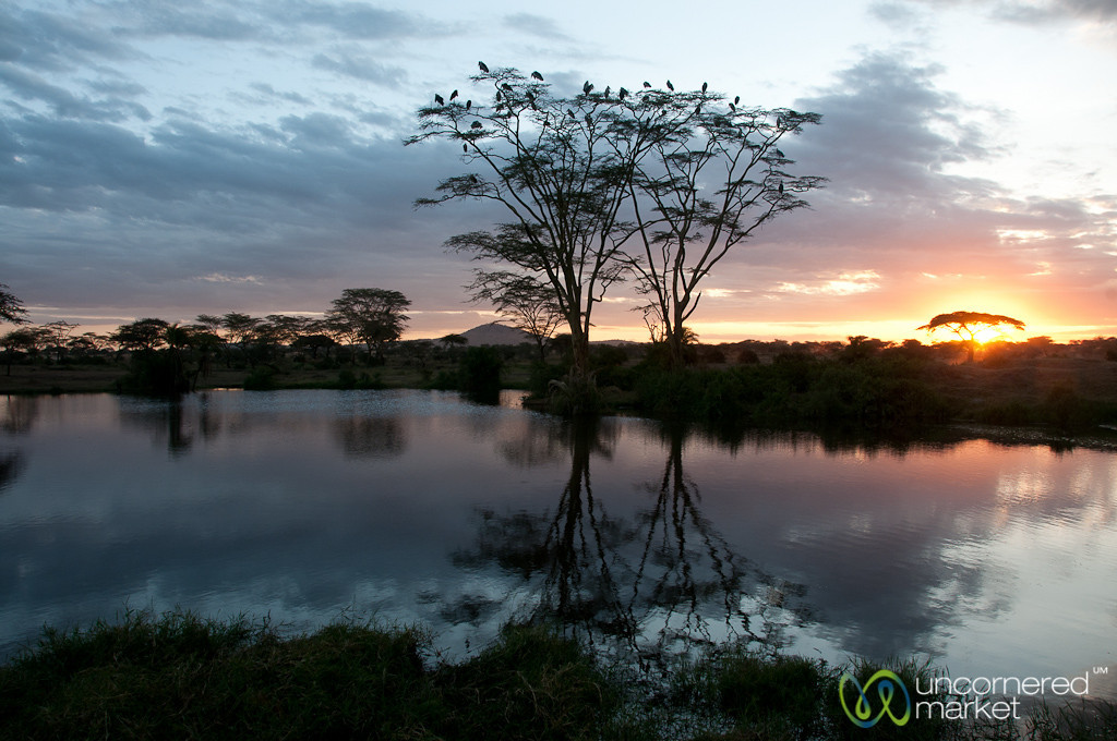 Reflection of Acacia Tree at Sunset - Serengeti, Tanzania