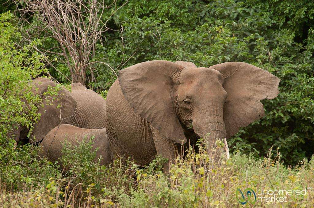 Family of Elephants - Lake Manyara, Tanzania