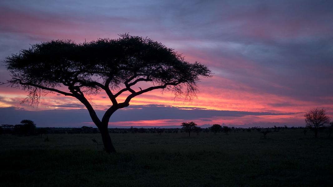 Sunrise safari in the Serengeti