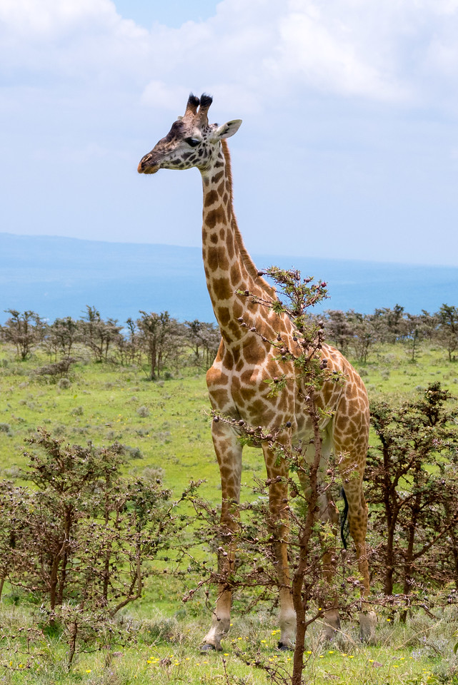 On the road between the Ngorongoro Crater and the Serenteti