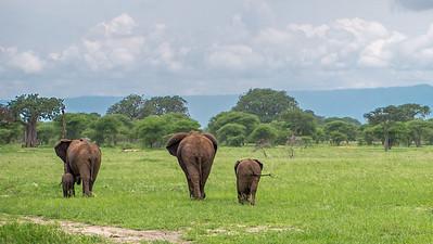 Tarangire National Park