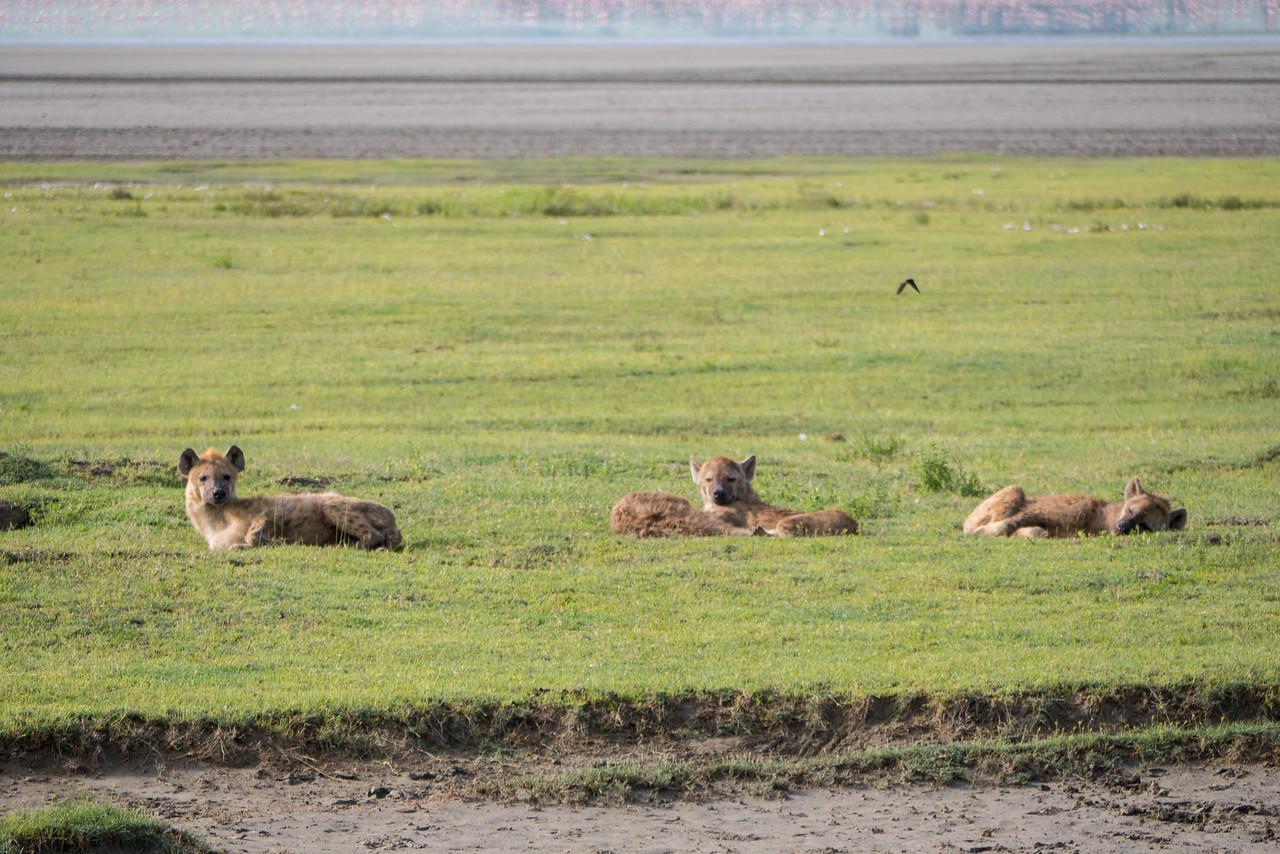 On safari at the Ngorongoro Crater