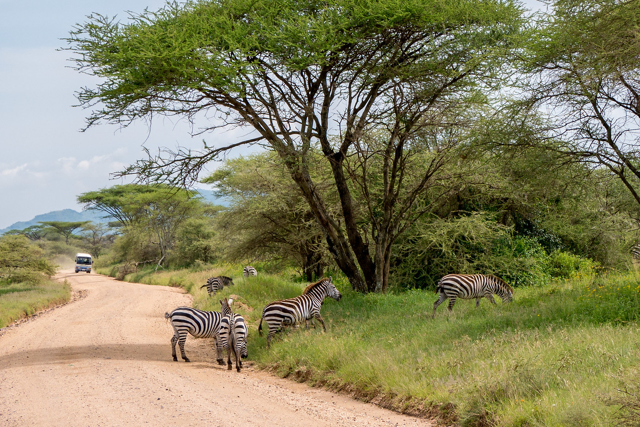 On safari in Serengeti National Park
