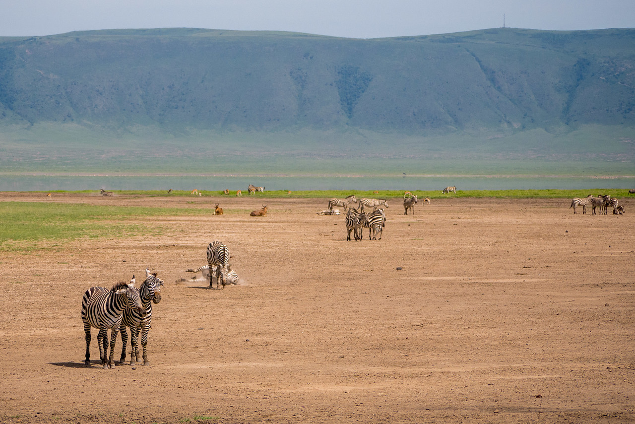 On safari at the Ngorongoro Crater