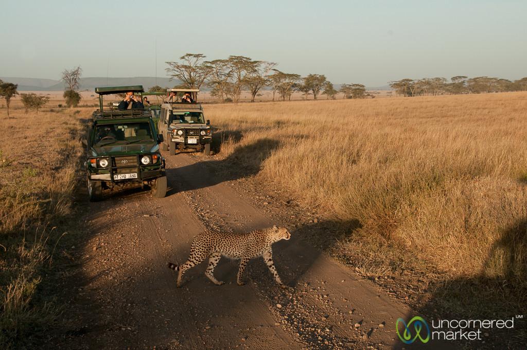 Cheetah Crossing Road - Serengeti, Tanzania