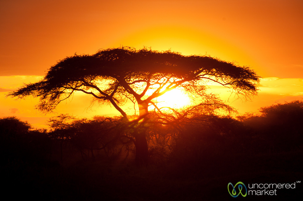 Sunset and Acacia Tree - Serengeti, Tanzania