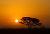Tarangire National Park, Tanzania, Africa.  February 2016