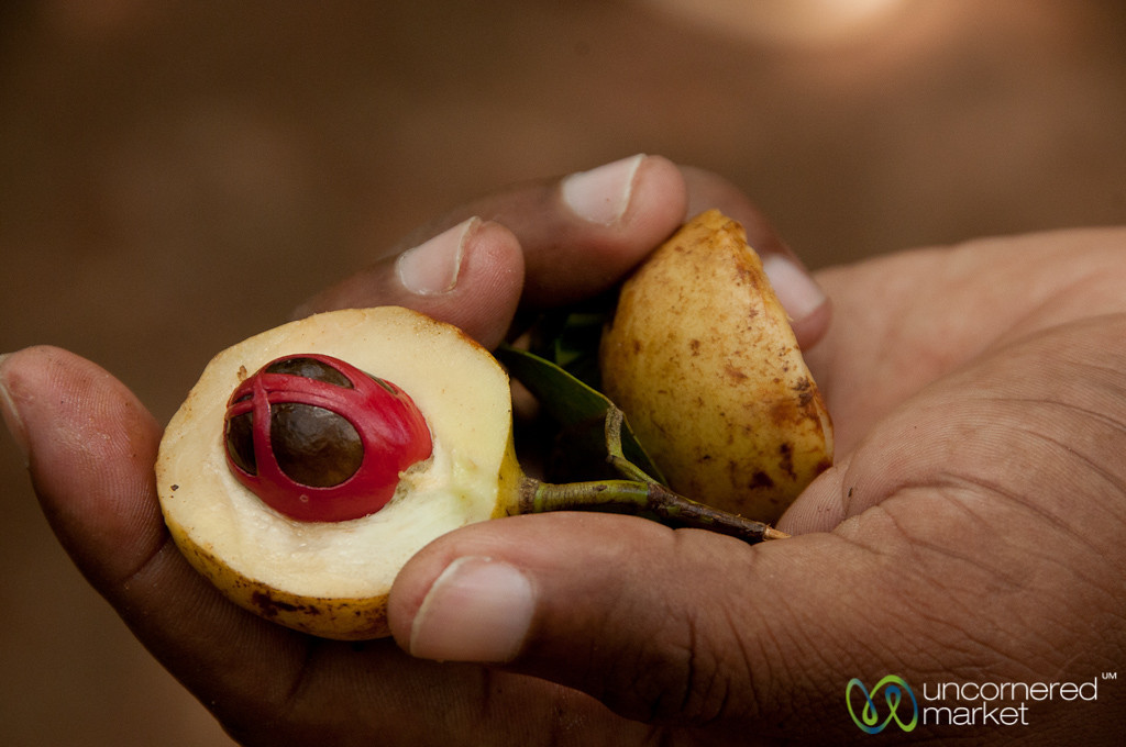 Nutmeg and Mace - Spice Tour, Zanzibar
