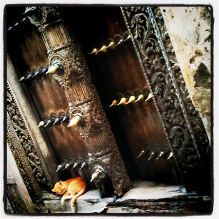 Cat Nap at Sultan's House in Stone Town, Zanzibar - Tanzania
