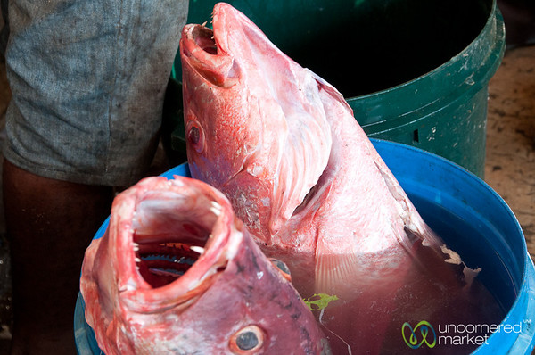 Fish Heads at Darajani Food Market - Stone Town, Zanzibar